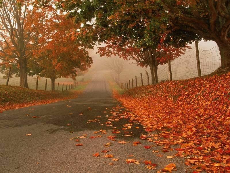 http://edensky.e.d.pic.centerblog.net/4mp0d9vl.jpg